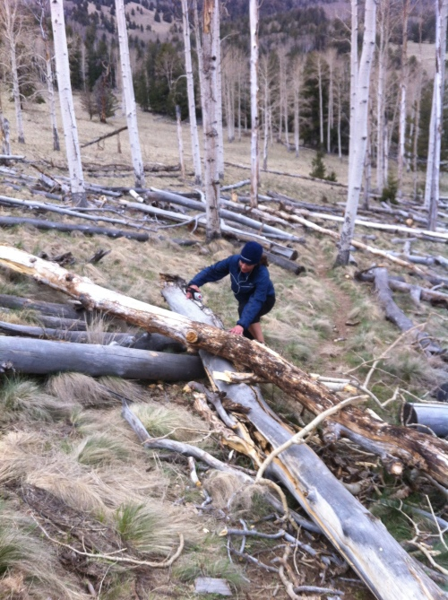 Norma navigating some of the Aspen deadfall.